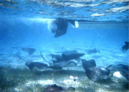 haai tussen het koraal